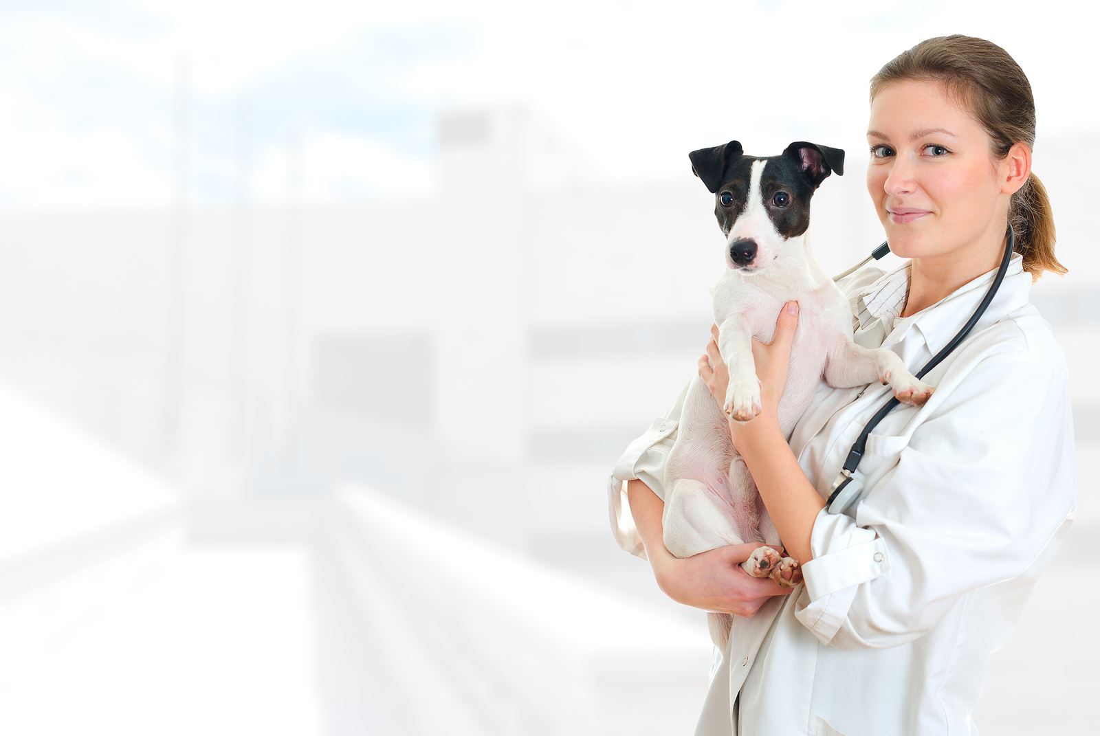Suburban Veterinary Clinic Discusses Pet Anesthesia